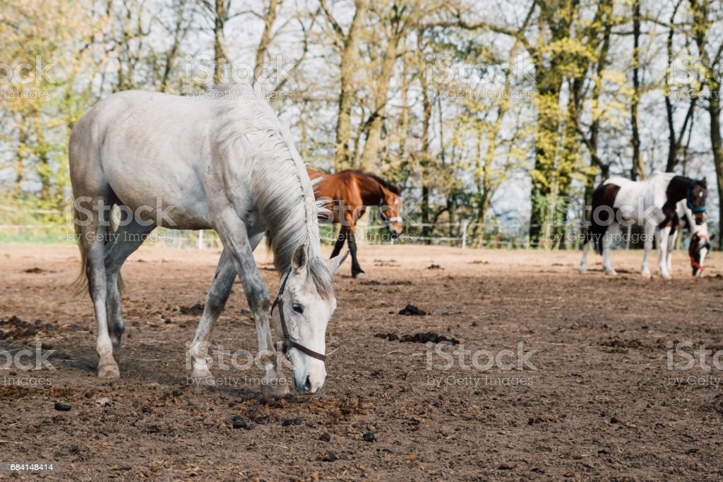 Paarden in de tuin royalty free stockfoto