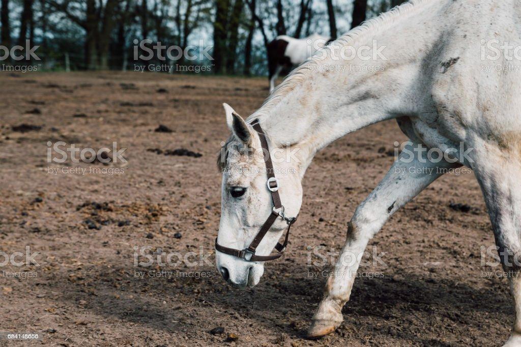 Hästar på gården royaltyfri bildbanksbilder