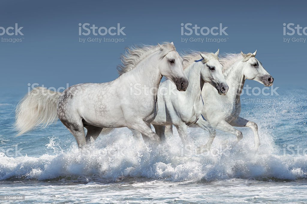Horses in water stock photo