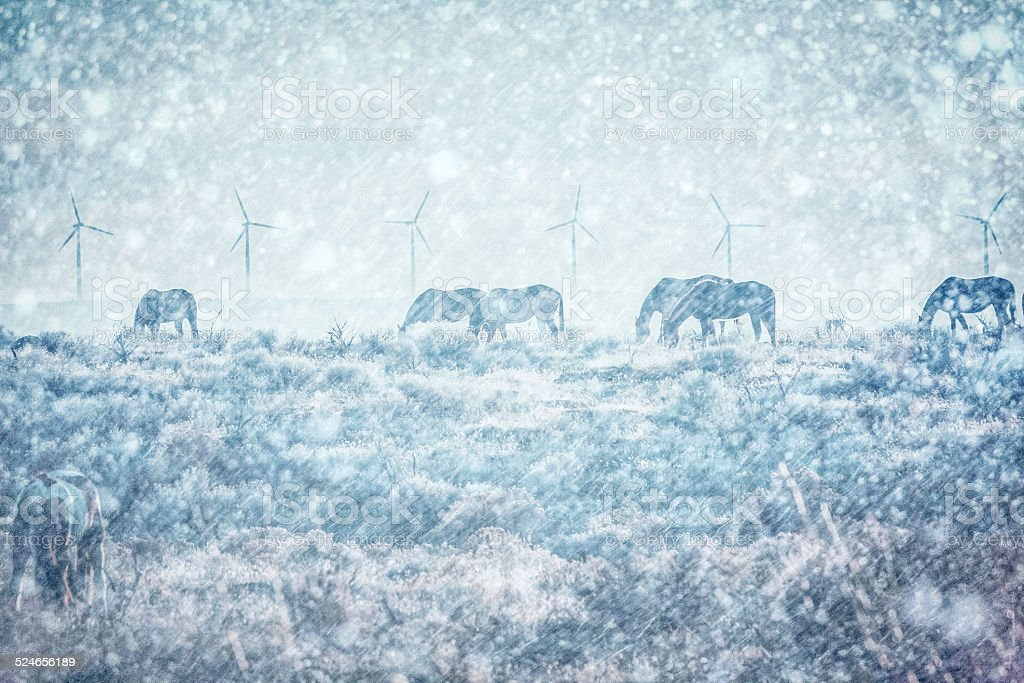 Horses in winter snowstorm stock photo