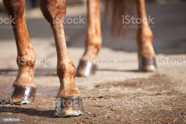 Horses legs and hooves picture id185282648?b=1&k=6&m=185282648&s=612x612&h=m9evgbnbaowvmjpsci1gzibabapydqlcn73si45hcg4=