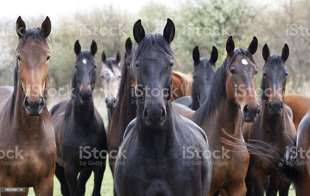 Pferde, Blick in die Kamera – Foto