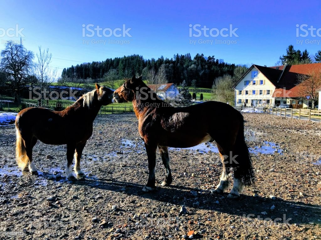 Horses love stock photo