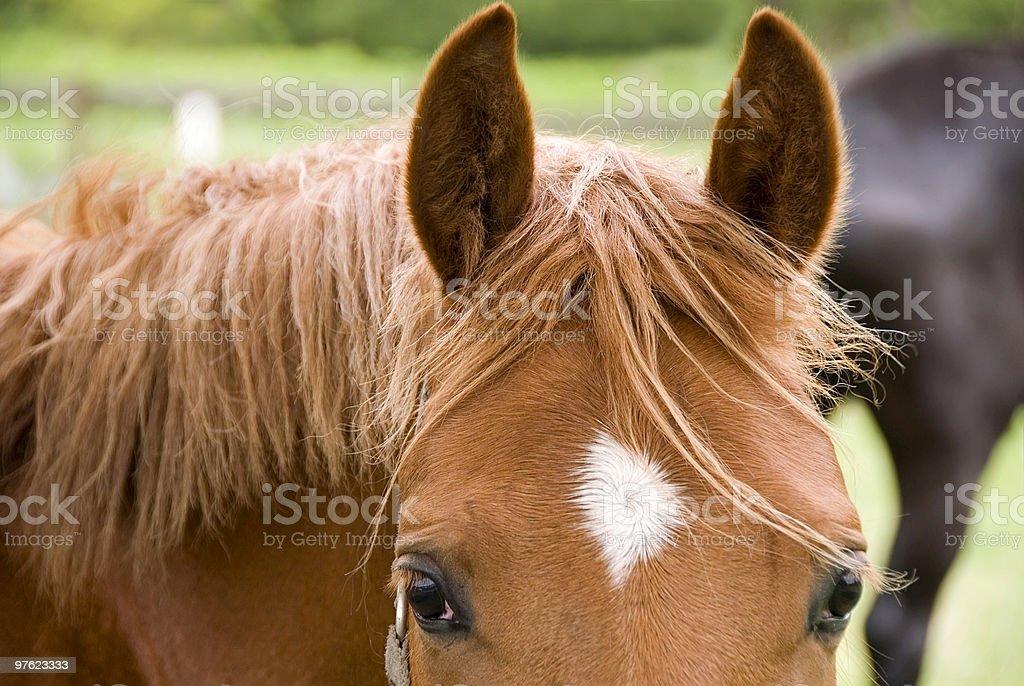 Horse's meltig Admirez la vue photo libre de droits