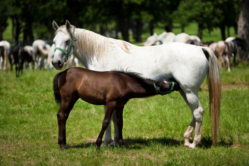 Horses Mother And Child Stock Photo - Download Image Now