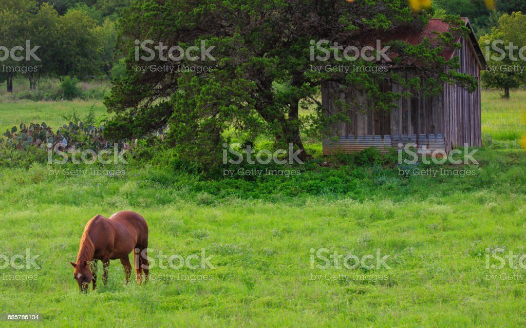 Horses near a shack royalty-free stock photo