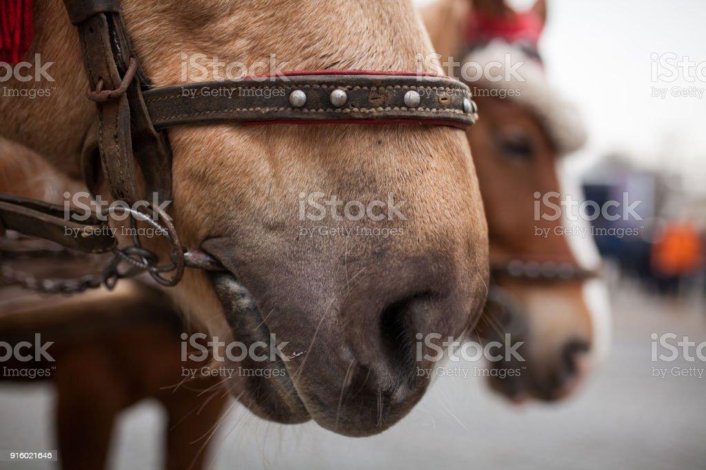 Horse\'s nose of black hose
