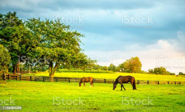 Photo of Horses on a farm in Kentucky