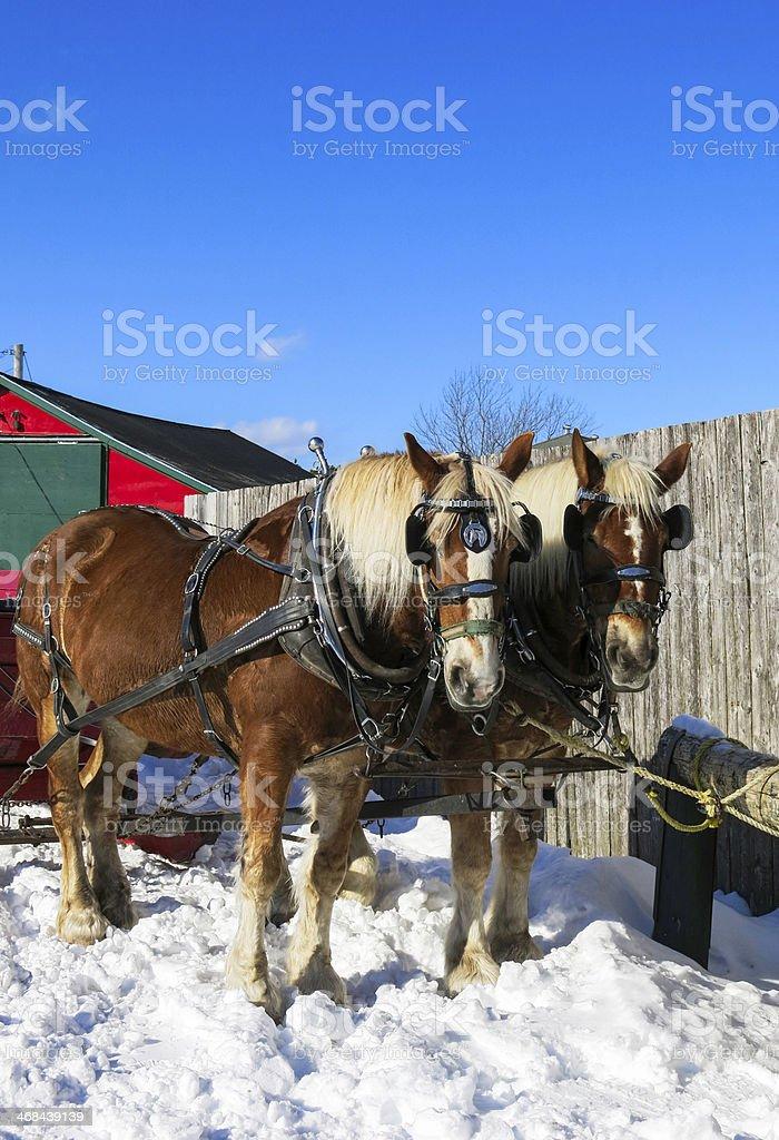 Horses on a Farm royalty-free stock photo