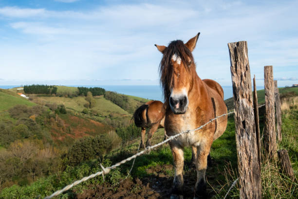 Horses on a meadow stock photo