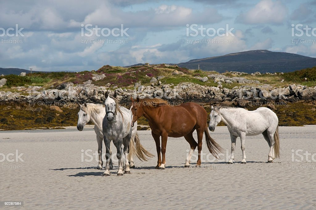 Horses on a sand beach royalty-free stock photo