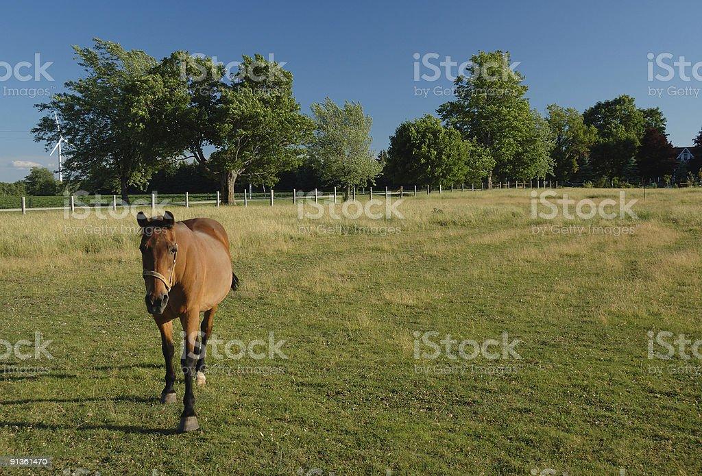 Horses on an Ontario farm stock photo