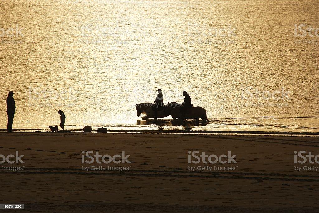 Horses on Beach royalty-free stock photo