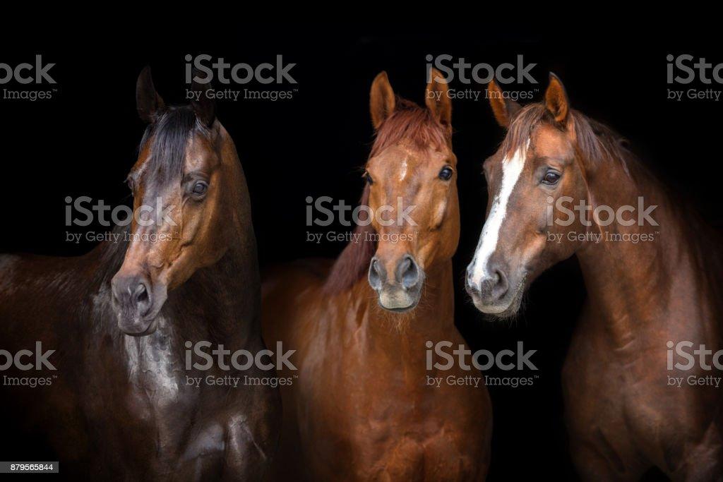 馬在黑色 - 免版稅剪裁圖圖庫照片