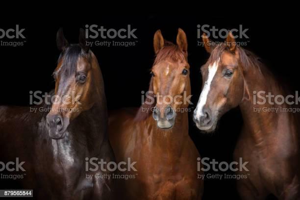 Horses on black picture id879565844?b=1&k=6&m=879565844&s=612x612&h=qypqom3kepigen nvcokhzksj6okg8oejmhh1iofav4=