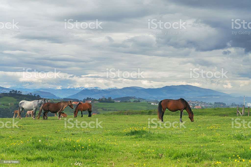 Horses on green grass in the background of the mountain stock photo