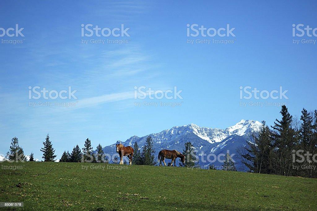 horses on hill royaltyfri bildbanksbilder