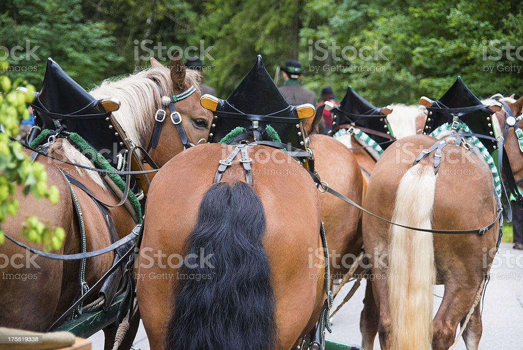 horses on horsedrawn from back view behind stock photo