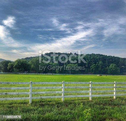 Horse Graze on rural land outside of Little Rock Arkansas.