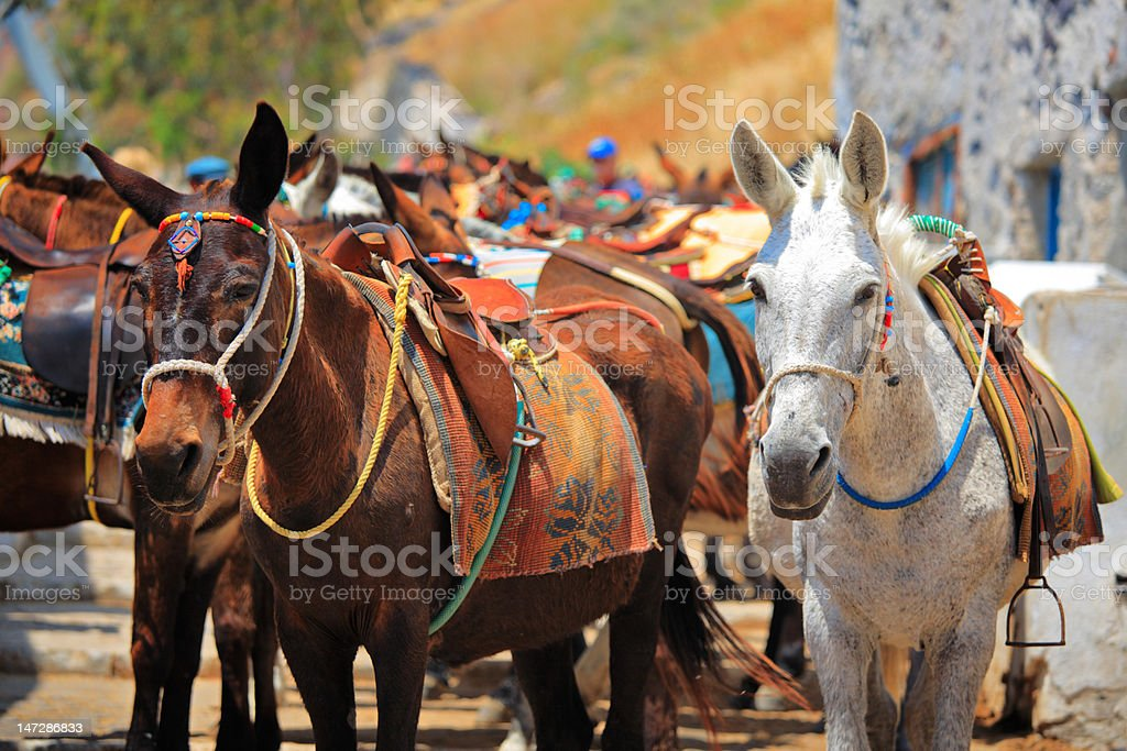 Horses on Santorini island royalty-free stock photo