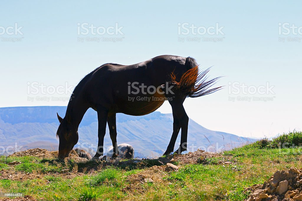 Horses On The Autumn Caucasus Meadow royalty-free stock photo