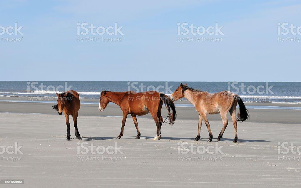 Horses on the Beach stock photo