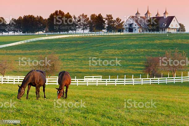 Horses on the farm picture id177000853?b=1&k=6&m=177000853&s=612x612&h=pystwmi5n9hocxn4w0ngaxk8j4lm 2 hhl7w4ldmmla=