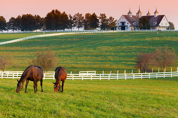 Horses on the Farm Horses grazing in the pasture at a horse farm in Kentucky ranch stock pictures, royalty-free photos & images