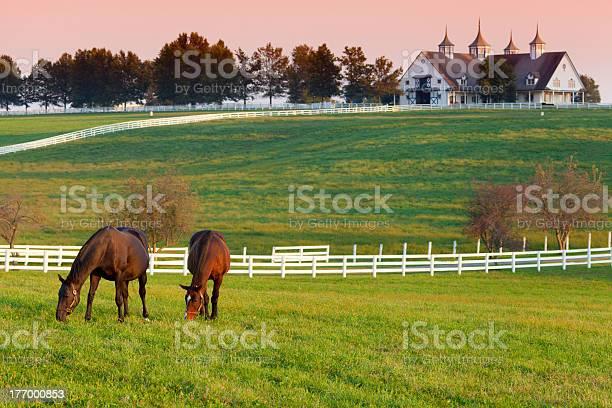 Photo of Horses on the Farm