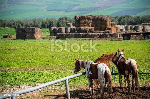 istock Horses on the farm 932670360