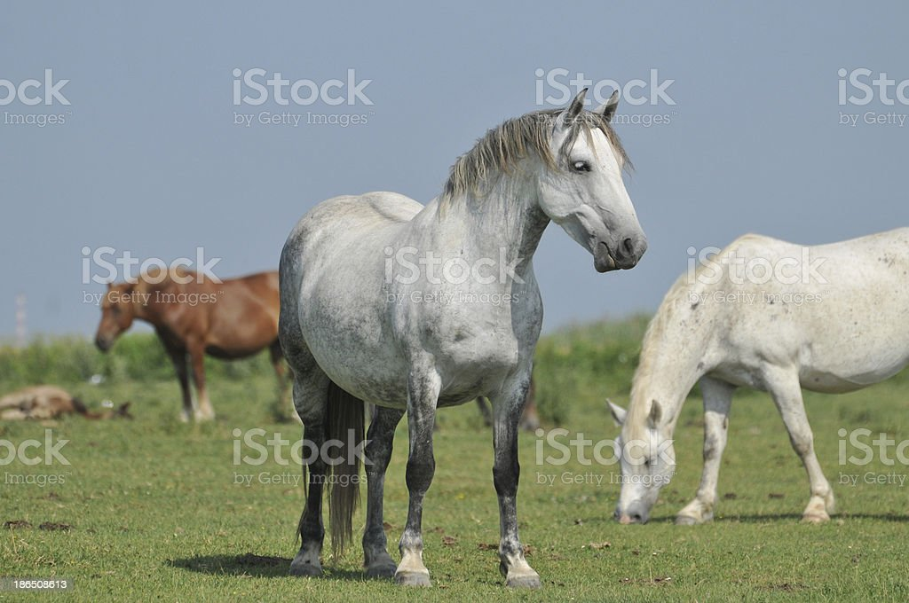 horses on the pasture royalty-free stock photo