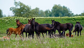 animals background, wild horses pasturing in nature.