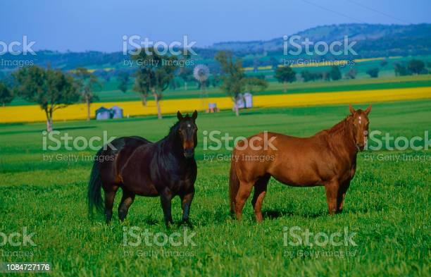 Horses picture id1084727176?b=1&k=6&m=1084727176&s=612x612&h=92nbakepstb0fcmemcrzkepdh1ko dfjjxopmcivf4e=