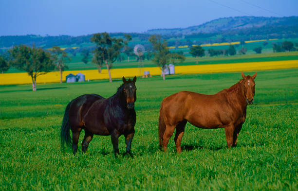 Horses picture id1084727176?b=1&k=6&m=1084727176&s=612x612&w=0&h=l7stz o6icasxa5nvsw0pg5rnr4wm1  yqn5agk1kb0=