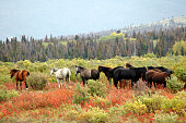 Horses standing in a meadow with fall colors,Alaska.