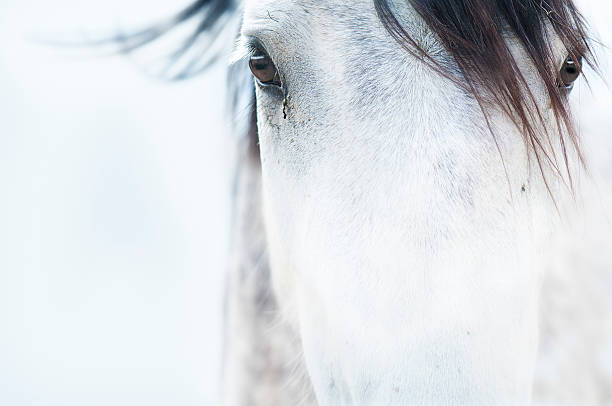 di cavalli - fauna selvatica foto e immagini stock