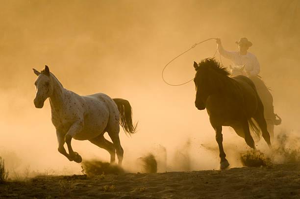 Horses picture id157315448?b=1&k=6&m=157315448&s=612x612&w=0&h=wxaldaiawtkl xulvt8khyskg2c79r3  i hyzq7tn0=