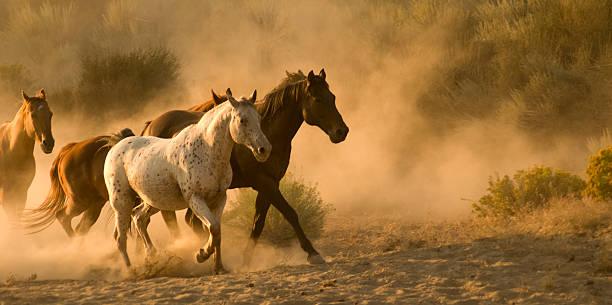 Horses picture id157339311?b=1&k=6&m=157339311&s=612x612&w=0&h=7pmc8mcw6w1ursjh17zjnhpm8ci vpx1v4bfu3xcrzm=