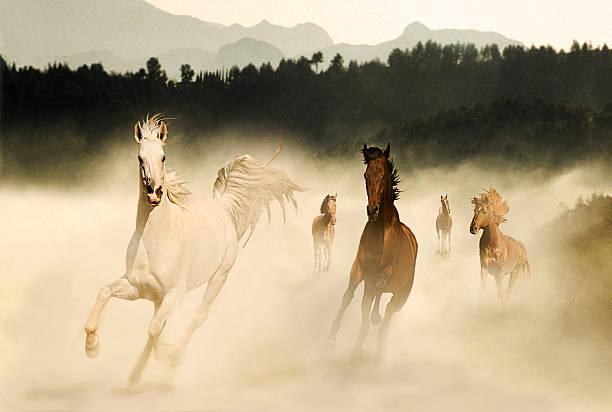 Horses picture id181142646?b=1&k=6&m=181142646&s=612x612&w=0&h=qra8oq8uvjnsljbtqm1rn813jbpc2i6 oygjwgonr 0=