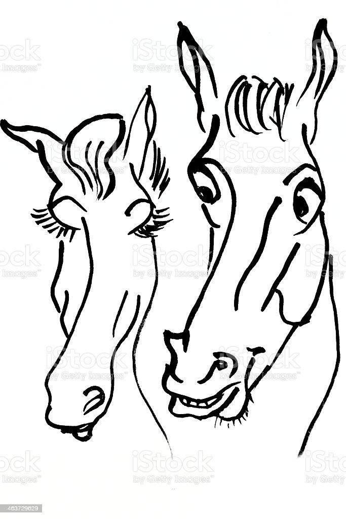 Pferde – Foto