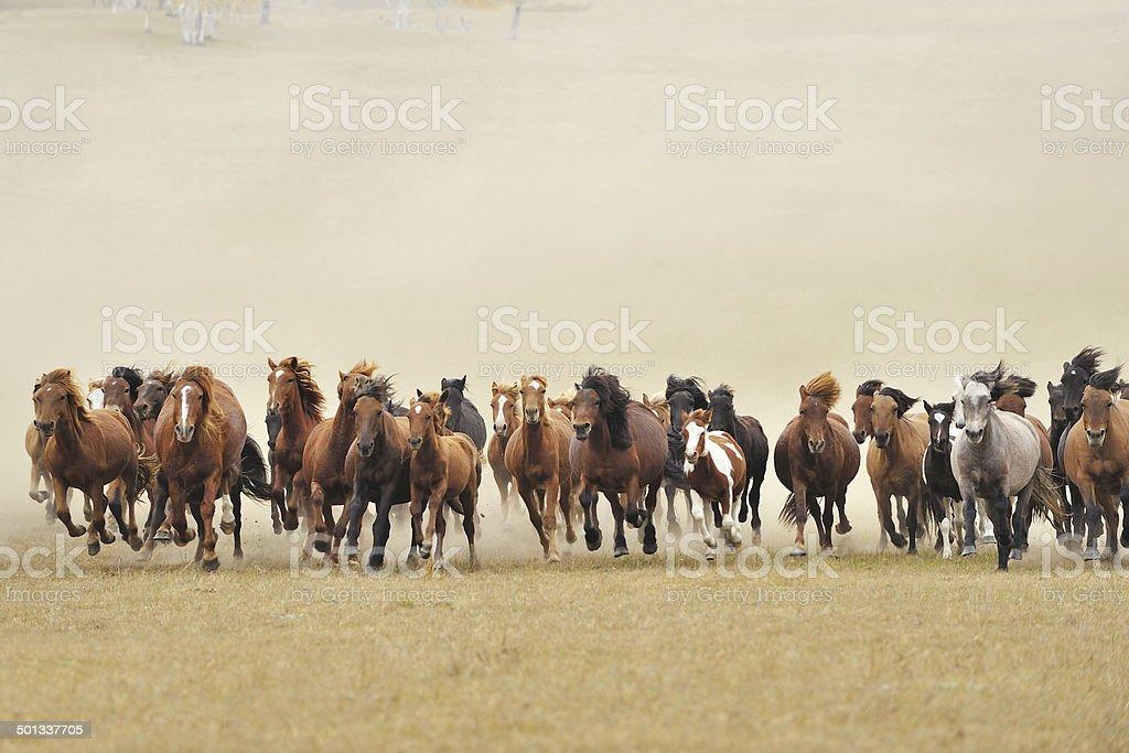 Cavalos - foto de acervo