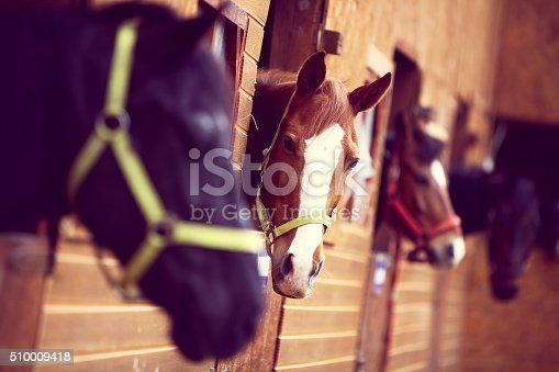 Color shot of some horses in a stable
