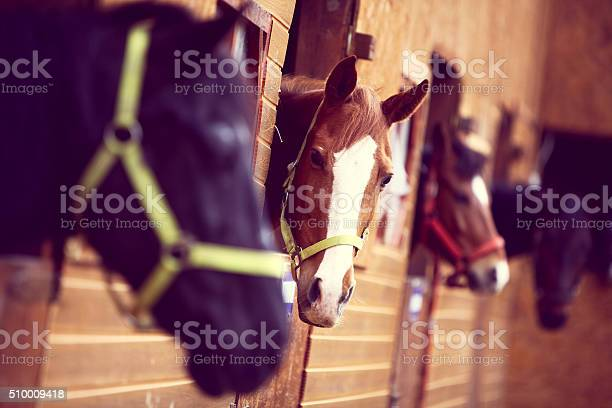Horses picture id510009418?b=1&k=6&m=510009418&s=612x612&h=dqofvpar1dipa7riei2jwf0qiw8awttsdkud8gkdefm=