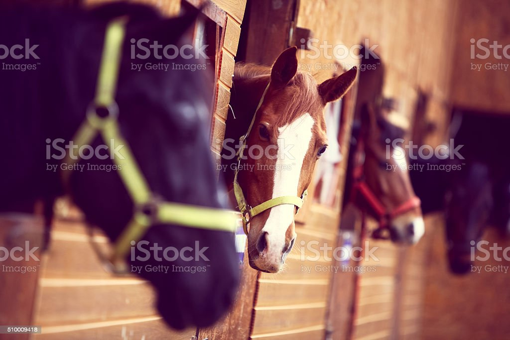 Chevaux - Photo
