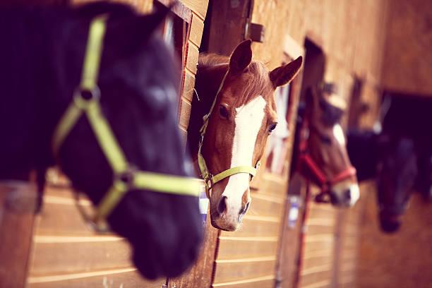 horses - paard stockfoto's en -beelden
