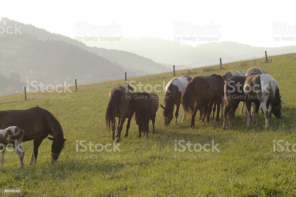 Konie zbiór zdjęć royalty-free