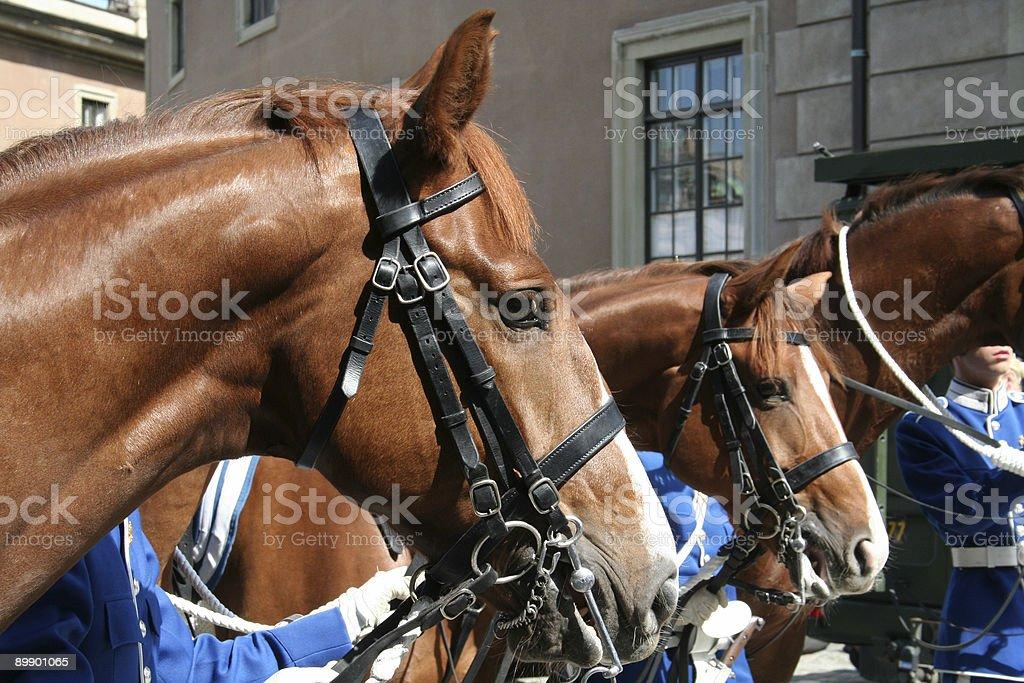 В виде лошадей Стоковые фото Стоковая фотография