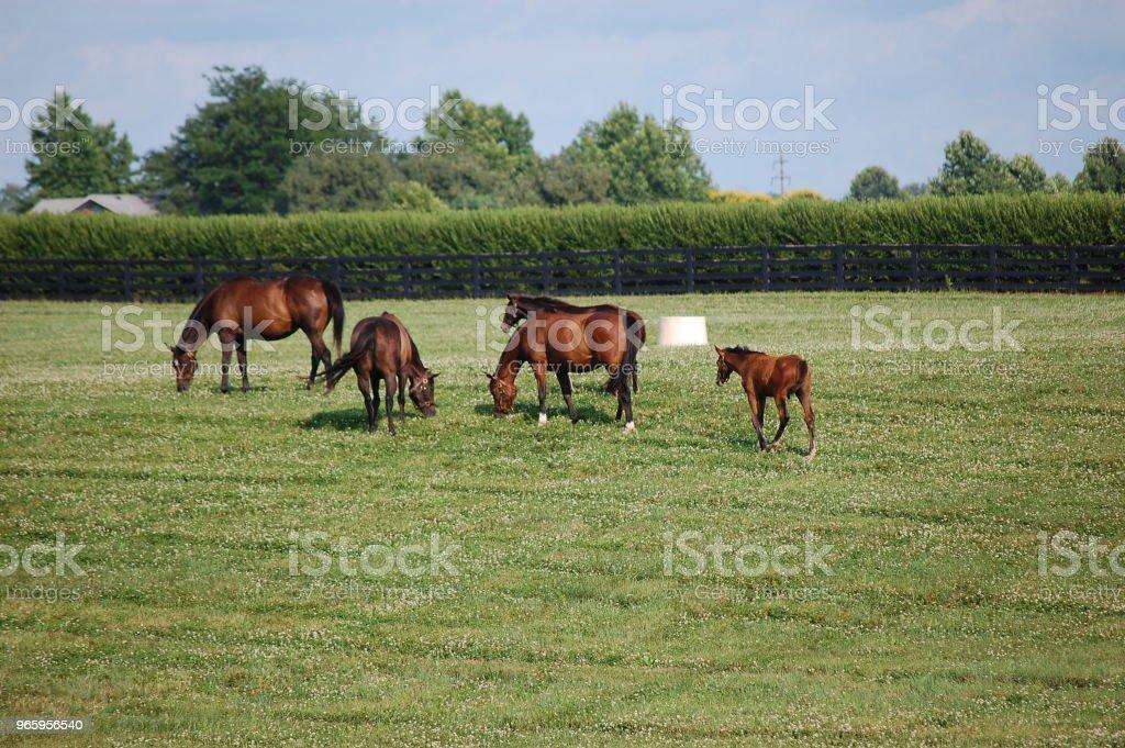 Paarden - Royalty-free Boerderij Stockfoto