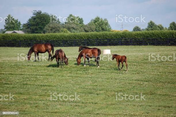 Paarden Stockfoto en meer beelden van Boerderij