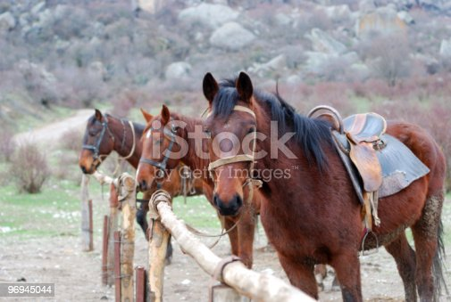 Horses Stock Photo & More Pictures of Animal